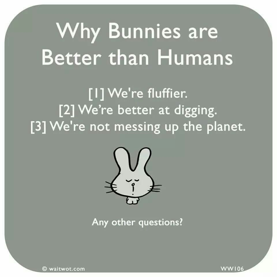 Bunnies are better than humans   Bunny mom, Bunny quotes, Pet bunny