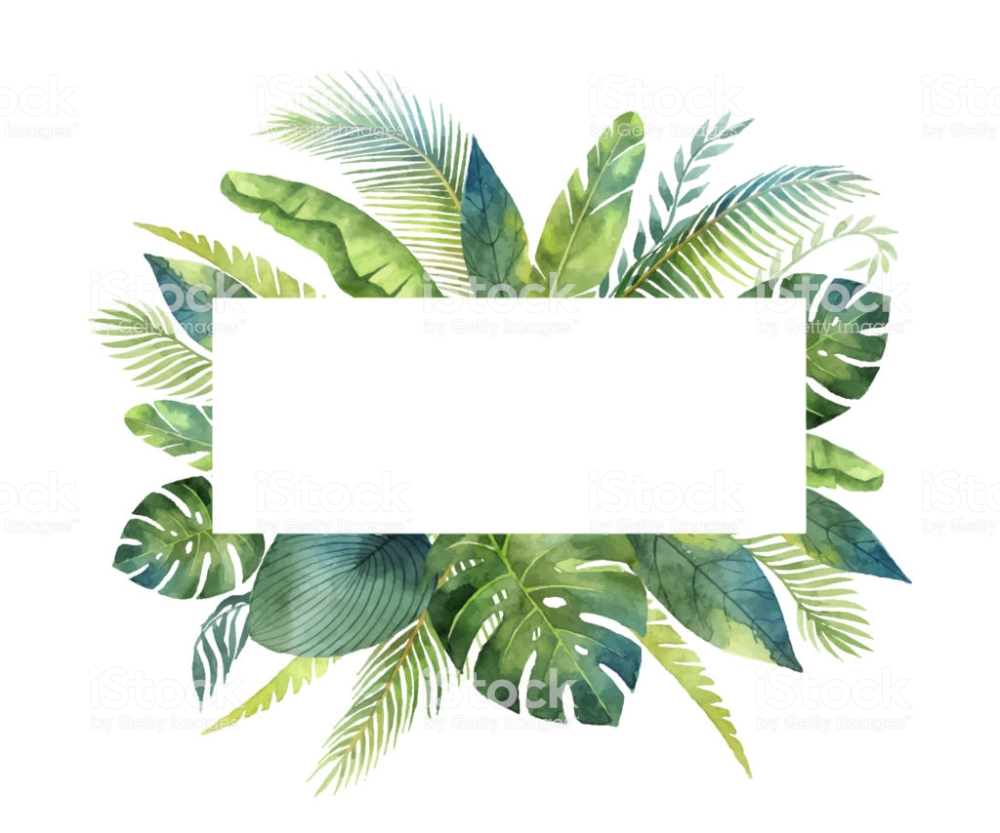 Watercolor Vector Banner Tropical Leaves And Branches Isolated On Hojas Tropicales Fondo De Pantalla Tropical Fondo De Pantalla De Hojas
