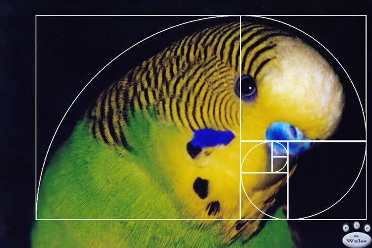 Fibonacci Sequence In Animals Fibonacci Numbers in N...