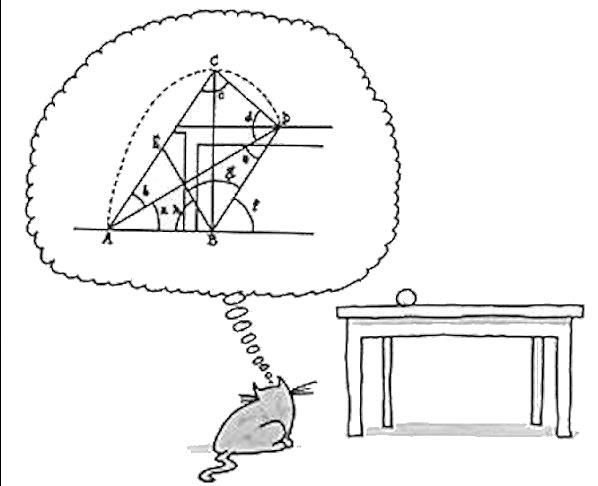 Cálculos felinos.
