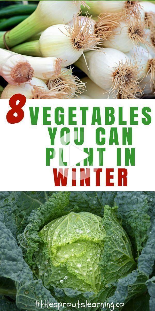 8 légumes que vous pouvez planter en hiver en 2020