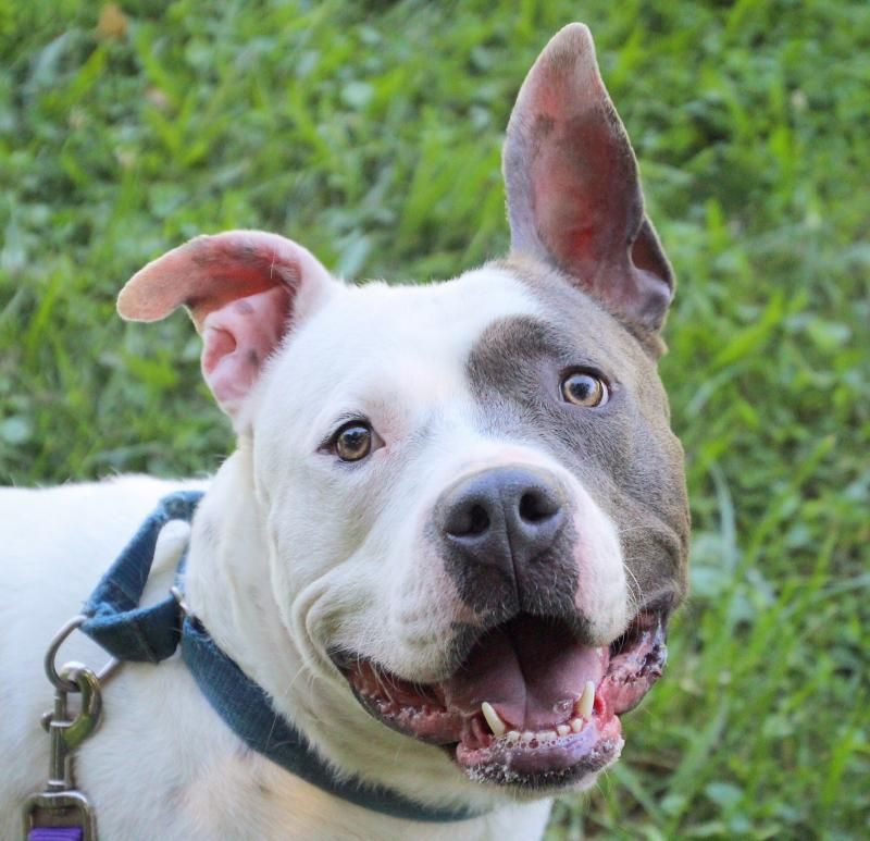 Adopt Jeremy On Please Adopt Me Animals In Great Need