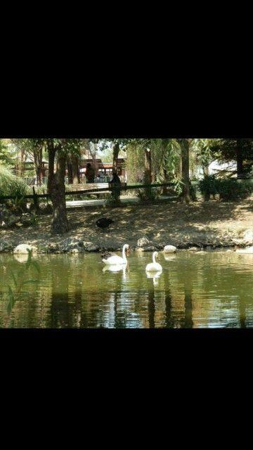 Botanic park-Osmangazi-Bursa