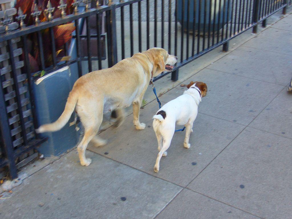 Dogs Walking Each Other Santa Cruz Ca Photo Credit Joefutrelle