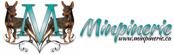 Minpinerie In Ottawa Ontario Http Minpinerie Ca Http Www Bestcatanddognutrition Com Roge Animal Rescue Shelters Animal Shelter