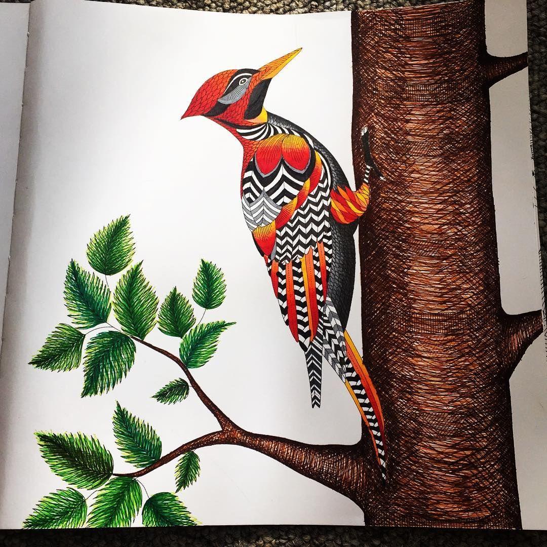 Animal kingdom coloring book gorilla - Millie Marotta S Animal Kingdom Woodpecker Woodpeckerscoloring Booksadult