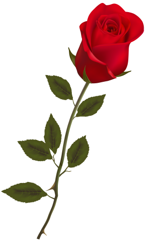 Beautiful Stem Red Rose Png Clipart Red Rose Png Rose Flower Png Beautiful Red Roses