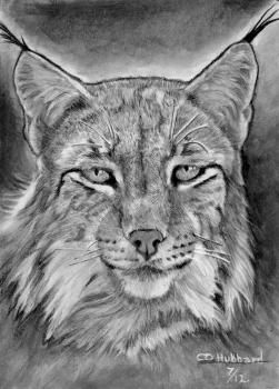 How To Draw A Realistic Lynx Art Pinterest Drawings Animal