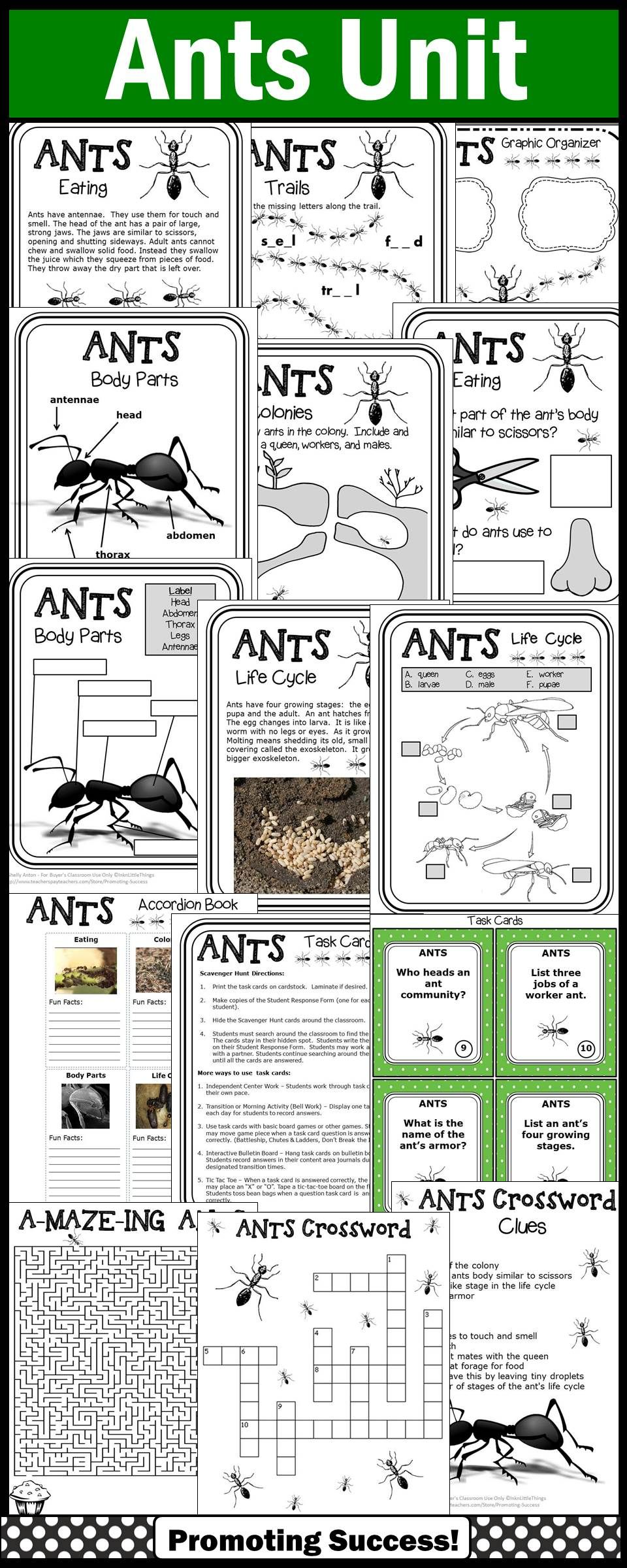 Ant Unit, Literacy and Science Emergency Sub Plans, Ants
