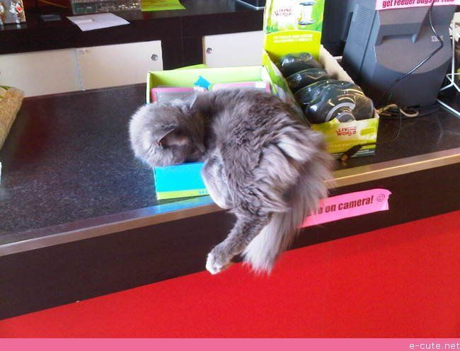 At My Local Pet Store If It Fits I Sits Pet Store Pets Cats