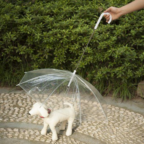 Favorite Transparent Umbrella for Dogs Keeps Your Dog Dry and Comfortable in Rain - http://www.thepuppy.org/favorite-transparent-umbrella-for-dogs-keeps-your-dog-dry-and-comfortable-in-rain/