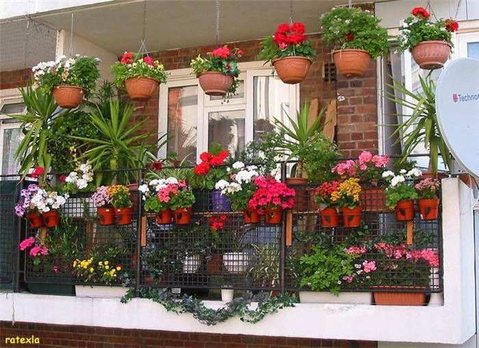 Balcony Gardens Photos | Beautiful Balcony Gardens - Kerala Home
