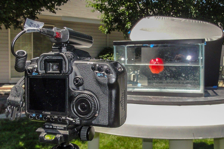 Making The Shot Your Guide To Creating Stunning High Speed Splash Photos Without Flash Dslr Photography Tips Splash Camera Hacks