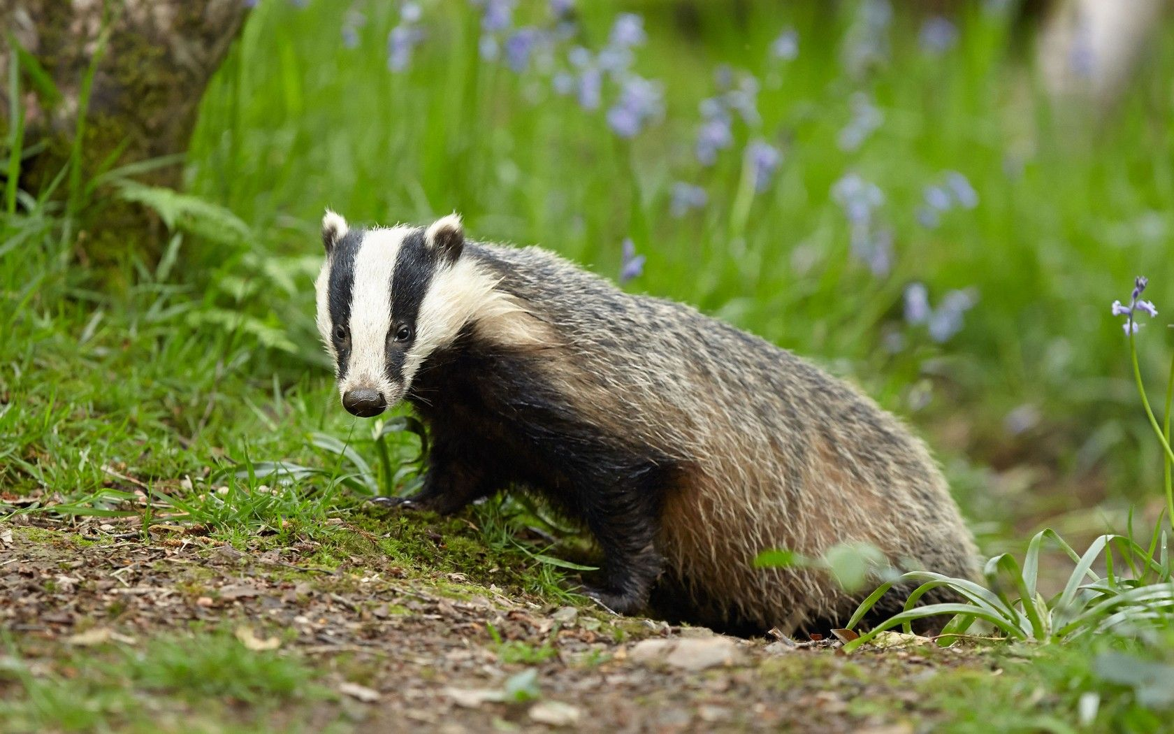 16+ National animal of england images