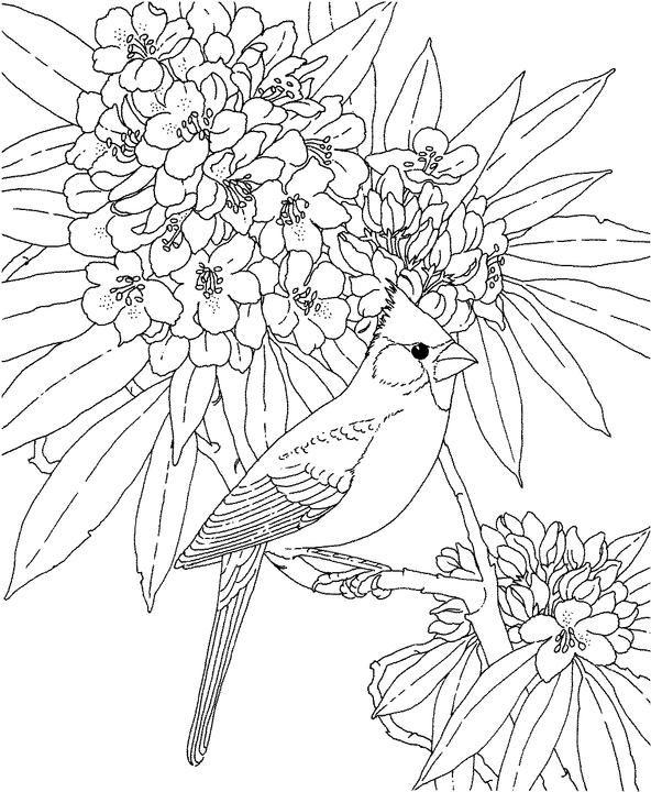 West Virginia Cardinal Coloring Page Bird Coloring Pages Animal Coloring Pages Flower Coloring Pages