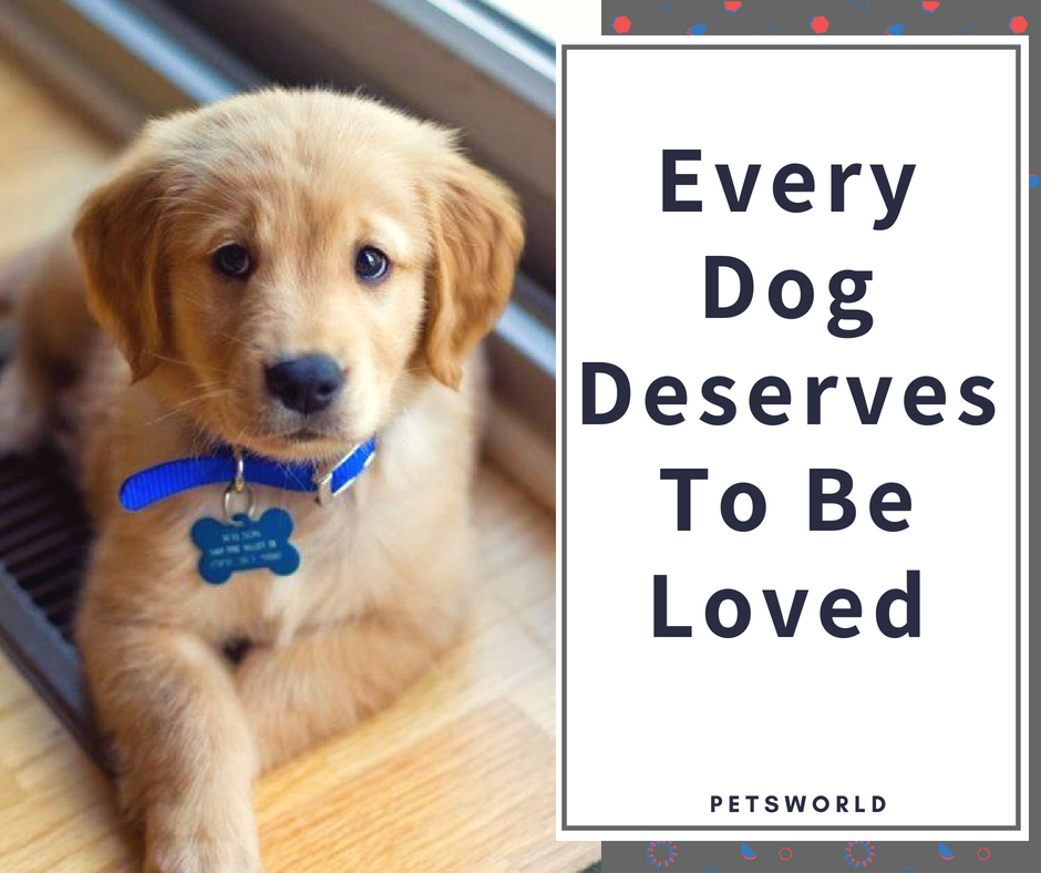 True That 3 Petsworld Dogs Puppies Quotes Quoeoftheday Quotestoliveby Puppy Quotes Dogs Dog Pet Beds
