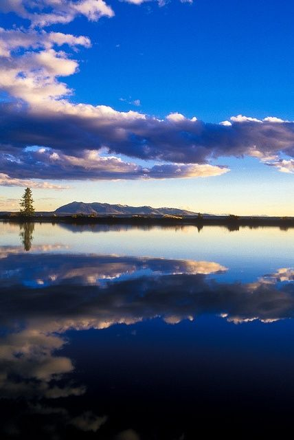 Mount Sheridan, clouds,  and a lodgepole pine tree reflected in  Yellowstone Lake at sunset. Yellowstone National Park, Wyoming