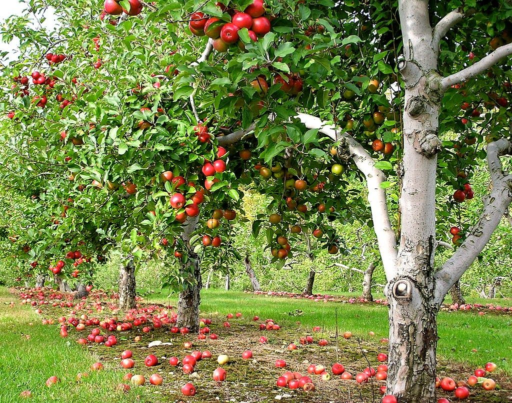 as melhores árvores de fruto