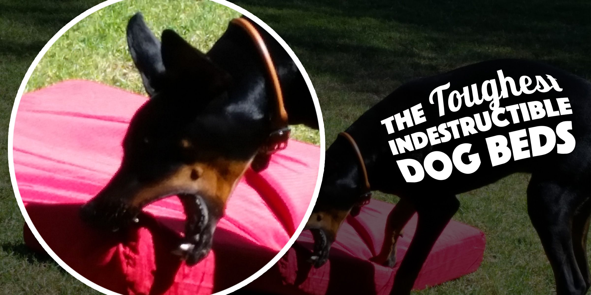 5 Really Indestructible Dog Beds (+ The Kong Dog Bed