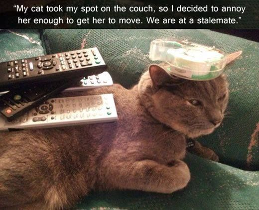 One More Move Human. One More Wrong Move. #lol #cats #cute http://ow.ly/TzWB2