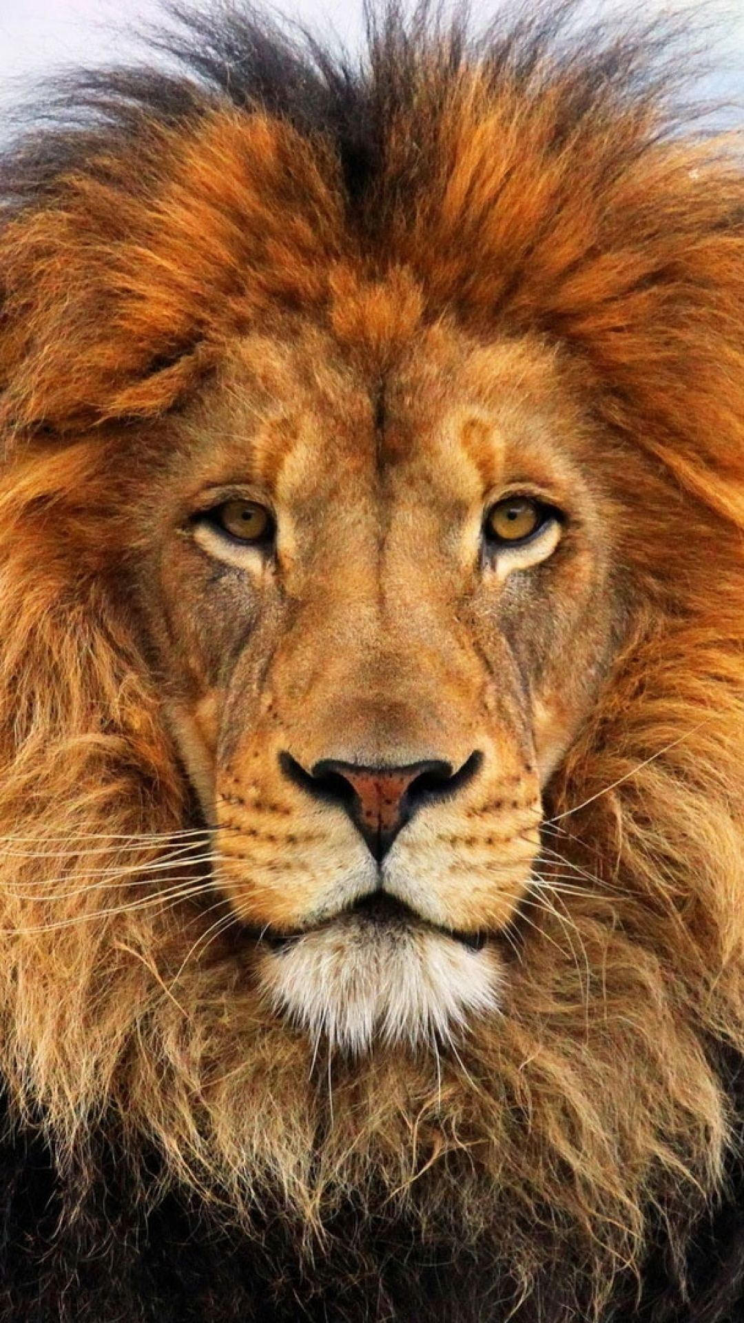 1080x1920 Wallpaper face, eyes, lion, fur, mane