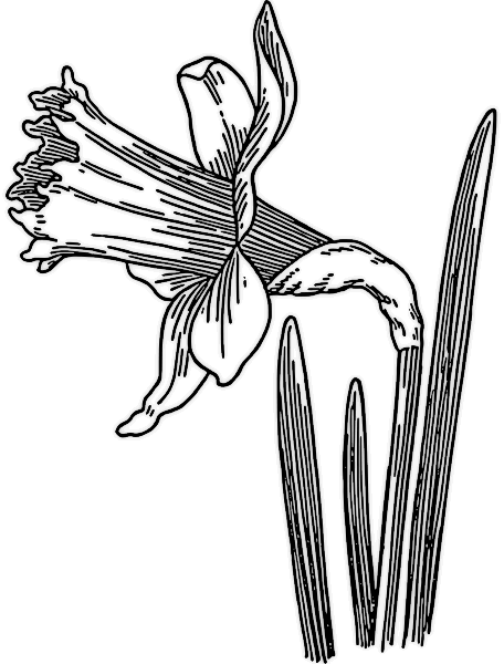 free daffodil clipart public domain flower clip art images and rh pinterest com daffodil clipart no background daffodil clipart black and white