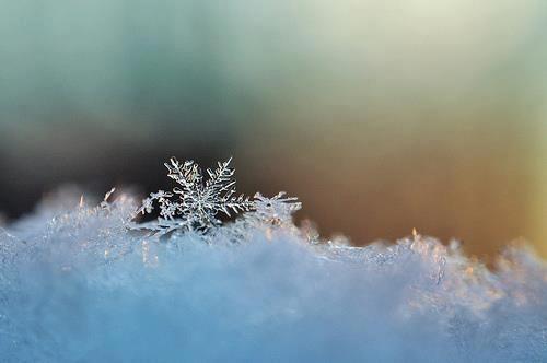 Wintertime Bliss