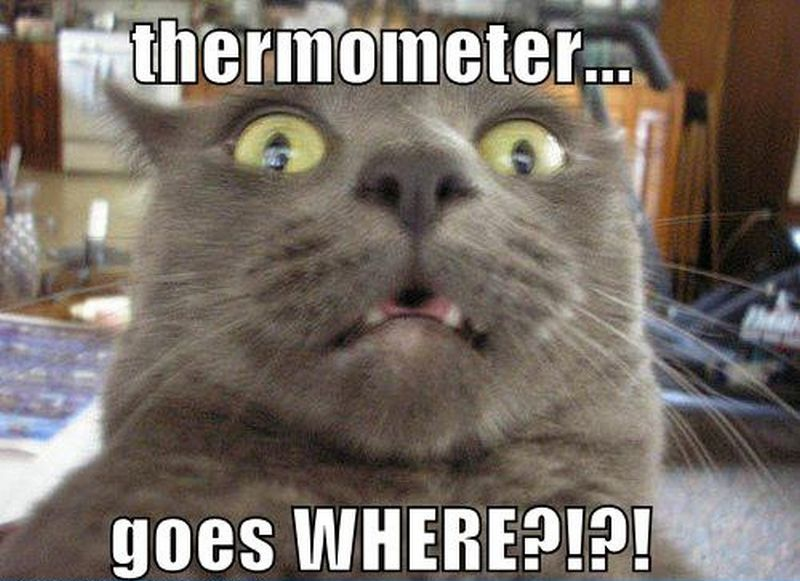 55 Funniest Cat Memes Ever Will Make You Laugh Right Meow Funny Cat Compilation Funny Cat Memes Funny Animals With Captions