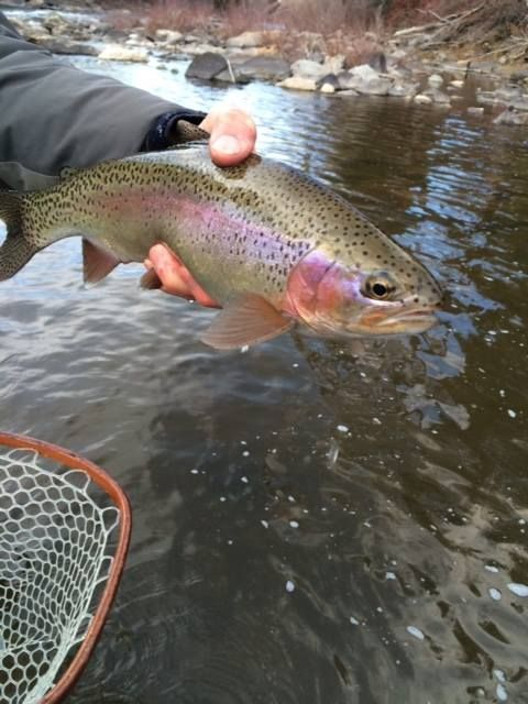 Fly Fishing In Vail Co Online Fly Fishing Store Fly Fishing Products Trips Fly Fishing Store Fly Shop Fish