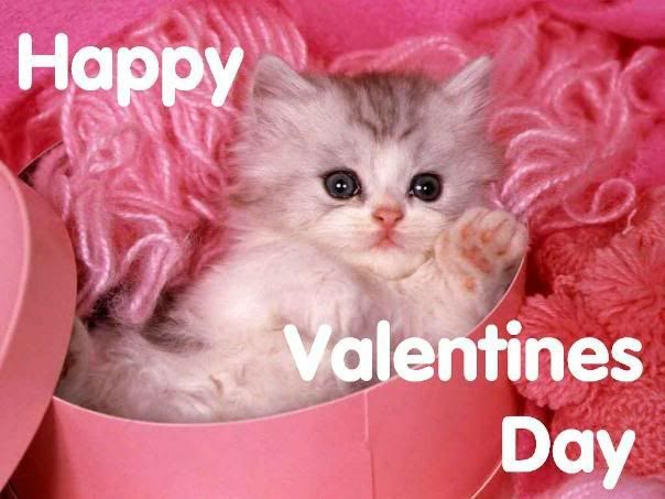 Valintines Day Picture Of Kittens The Single Girl S Valentine S