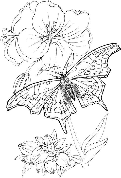 Butterfly Coloring Pages 24 Free Patterns Yarn Butterfly