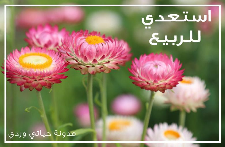 Flowers HD Wallpapers In High Quality And Widescreen Resolutions From Page 1