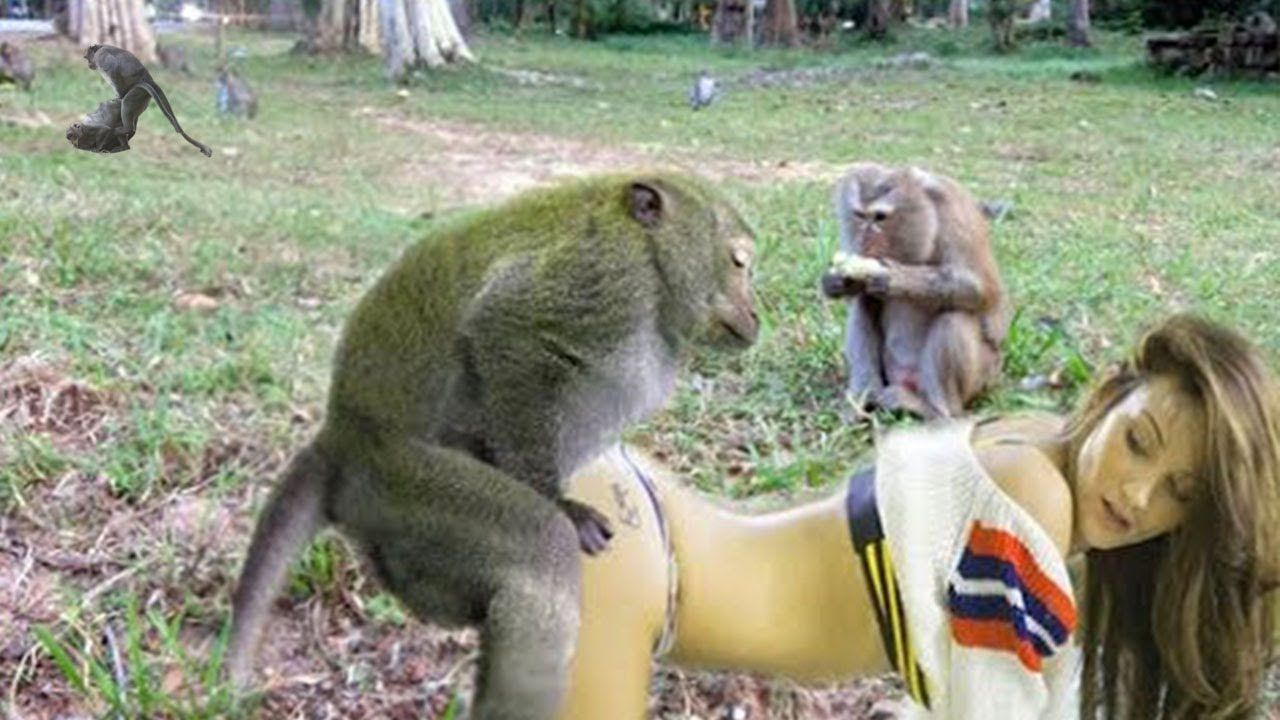 Pin on Monkey
