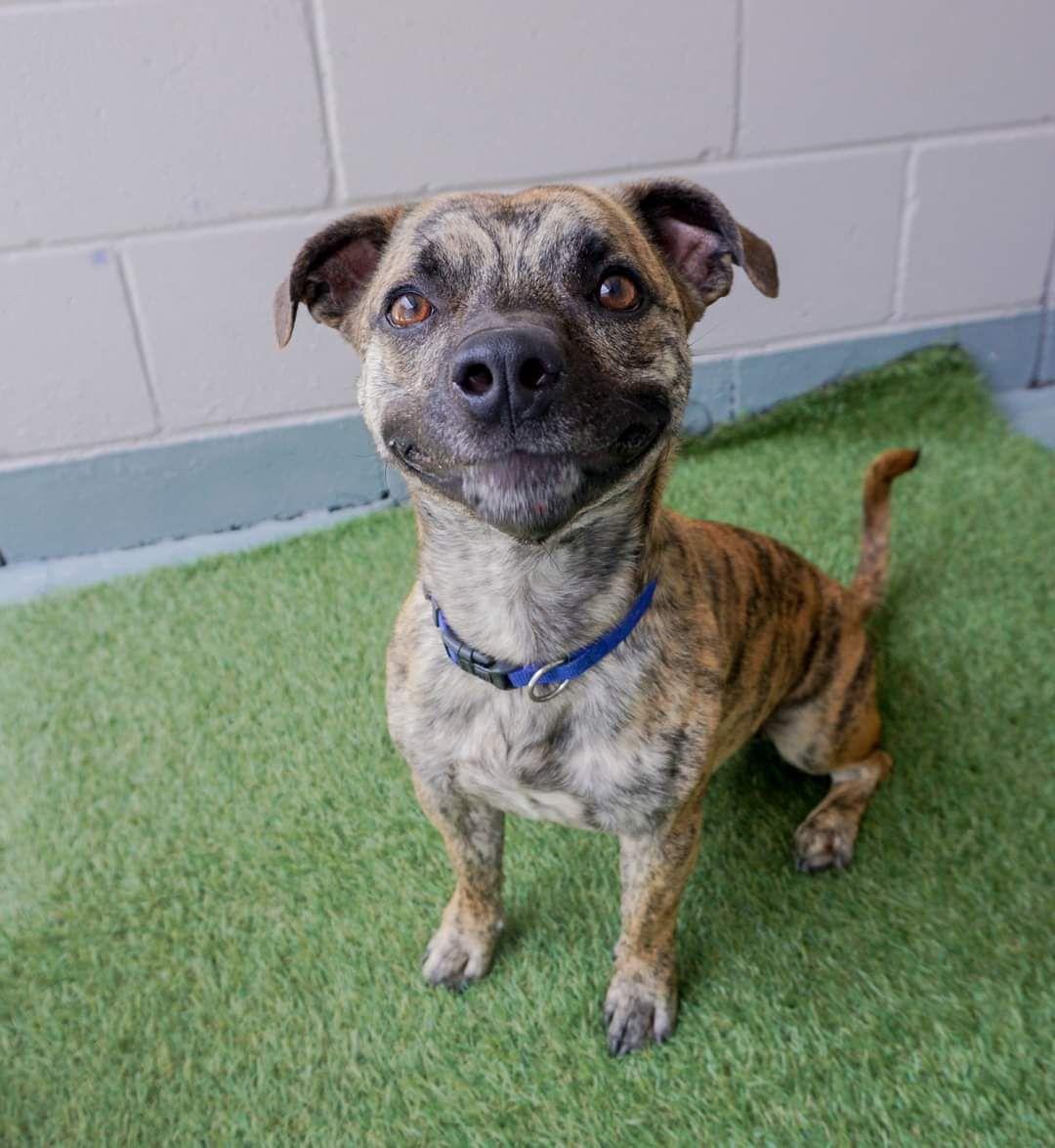 The Most Beautiful Smile From Animal Welfare League Qld Australia