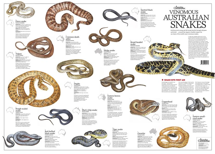 Of the world's deadliest snakes, numbers 1 to 11 come from