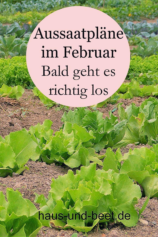 Photo of Aussaatpläne im Februar – Bald geht es richtig los – Haus und Beet