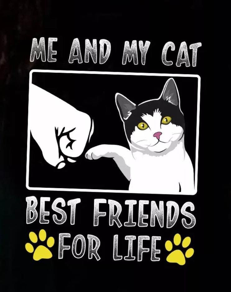 Pin By Aya Ahmed On Animal Loving Cat Quotes Cat Qoutes Pretty Cats