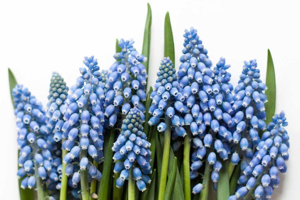 Welche Blumen Gibt Es Im Mai Schnittblumen Saison Kalender Blumigo Blaue Blumen Kommunion Zur Taufe