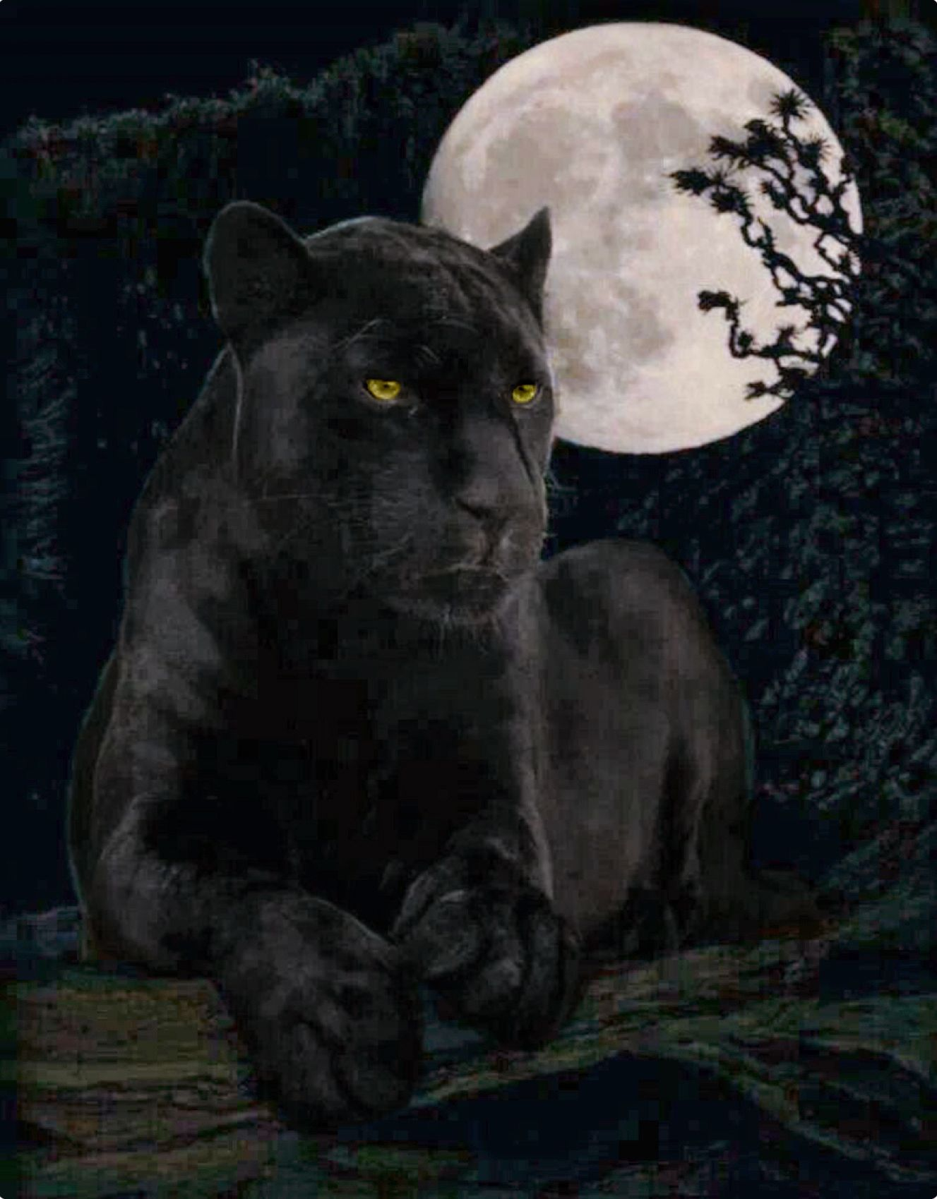 Black Jaguar Under The Moon I Can Tell This Has Been