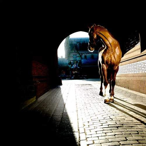 Horse Pictures by Matthew Seed