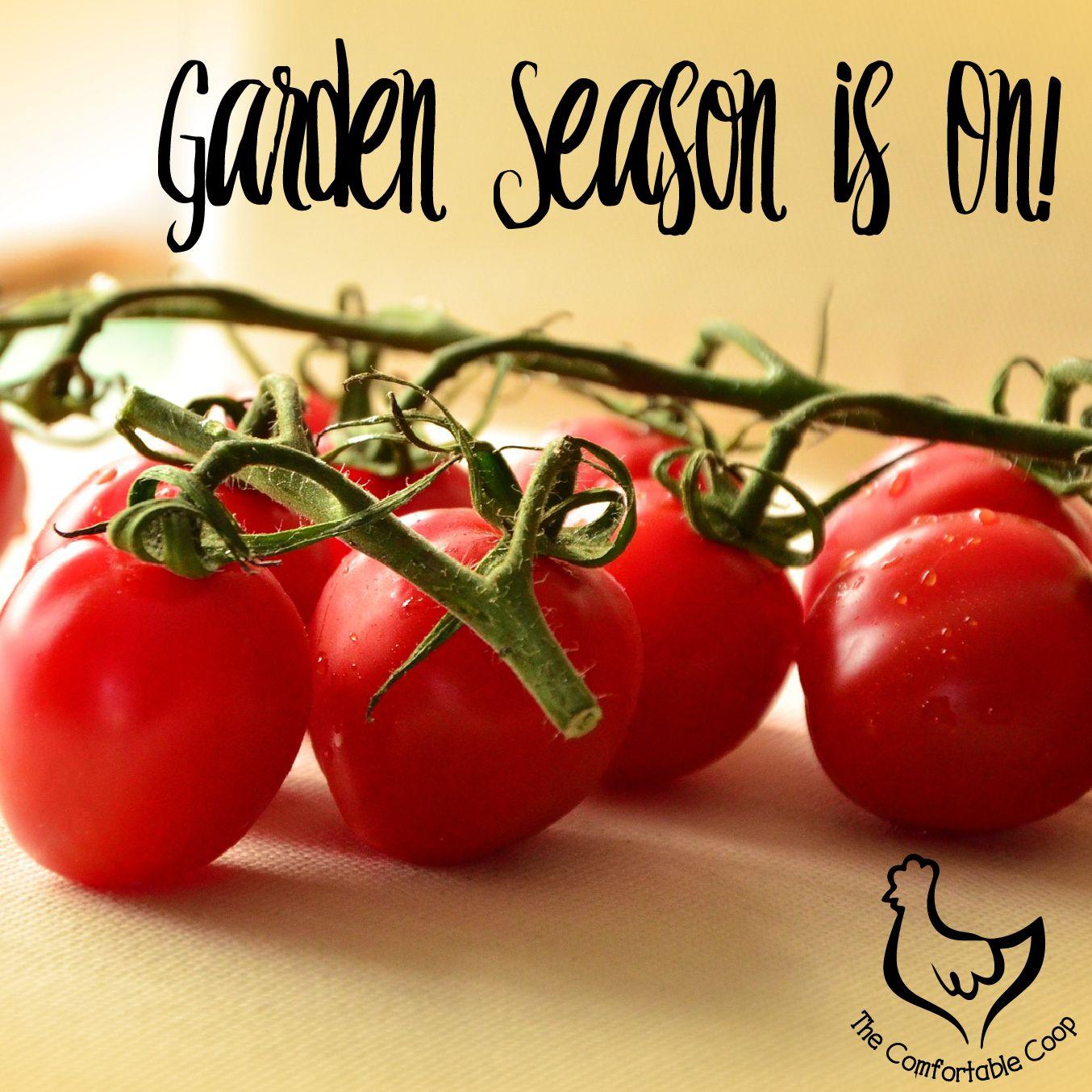 Garden Season Is On Tomato Red Food Food