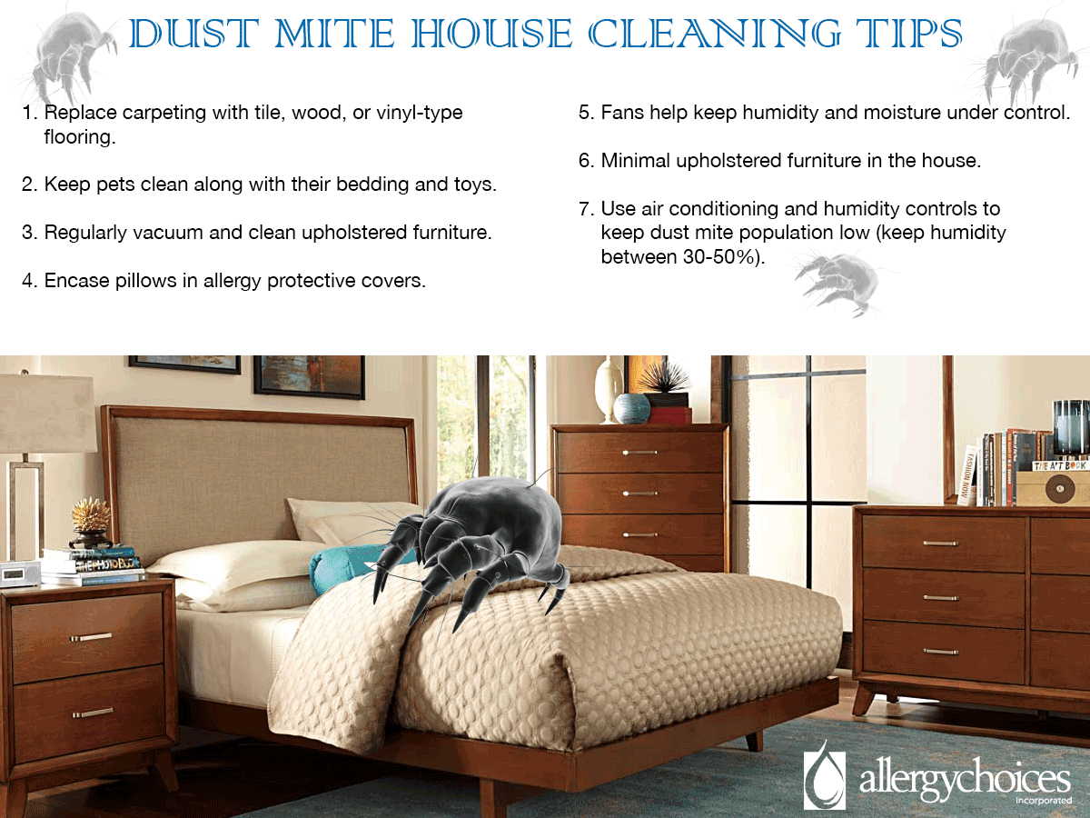 understand and control dust mites in your home read what dr mary
