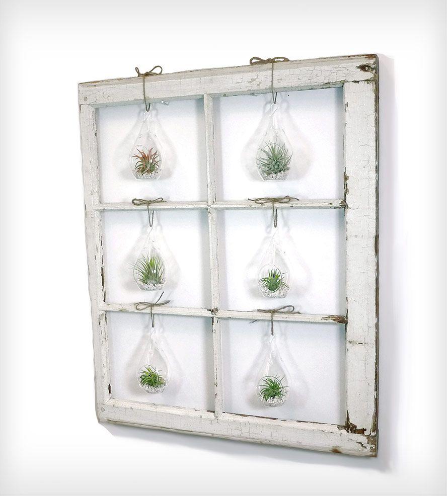 Window Frame Terrarium - 6-Pane | Window frames, Terraria and Window