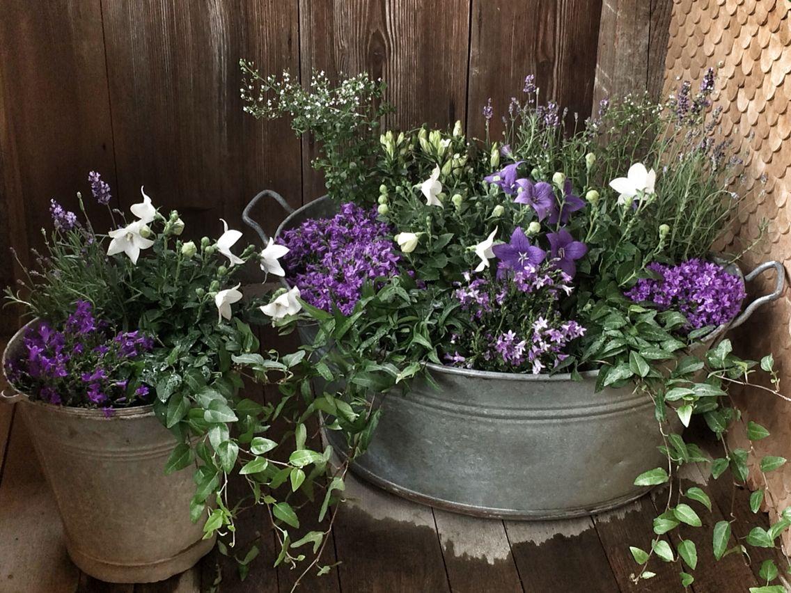 Zinkwanne Zinkkübel Mit Lila Und Weissen Blumen Mit