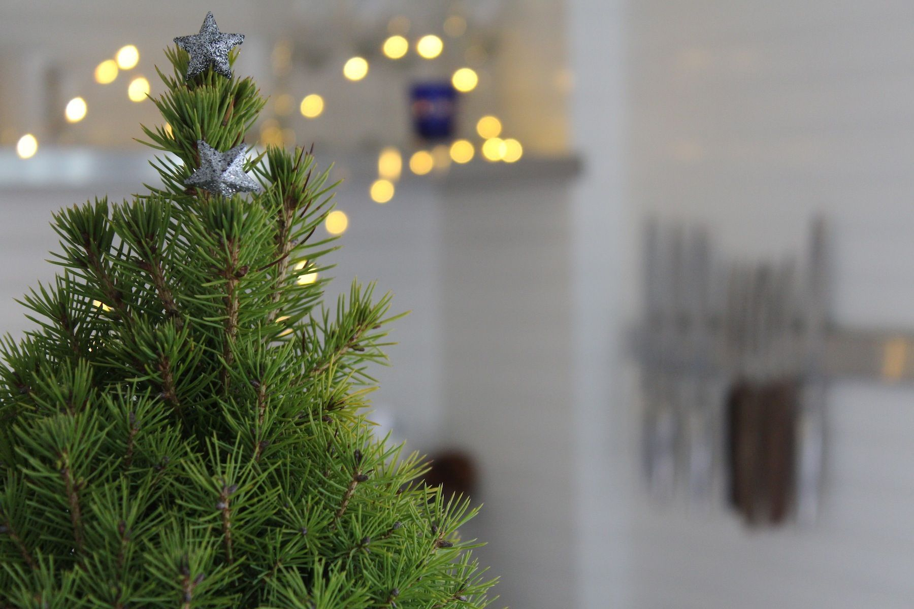 Wanted Dead or Alive: The Perfect Christmas Tree: Gardenista