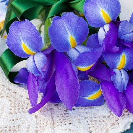 Symbolic Meanings Of Flowers That You Ve Been Wanting To Know February