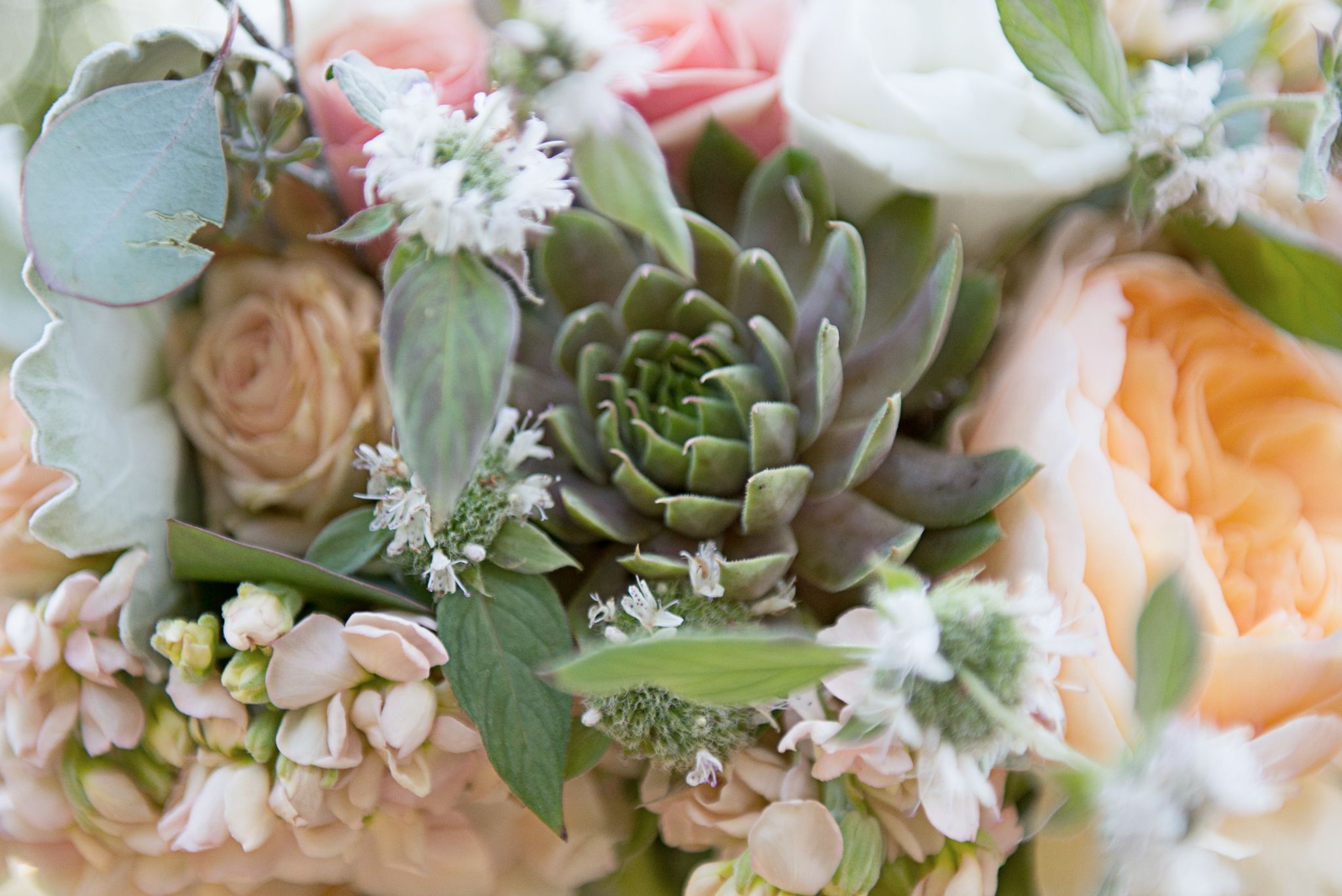 Bridal bouquet with succulents, peach garden roses, white astrantia, spray rose, and seeded eucalyptus by Karen Thorsey  - Foxtail Cottage Florals