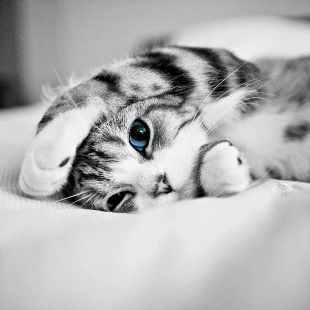 Goede Super schattige kitten, zwart wit | Humor that I love - Schattig AJ-82