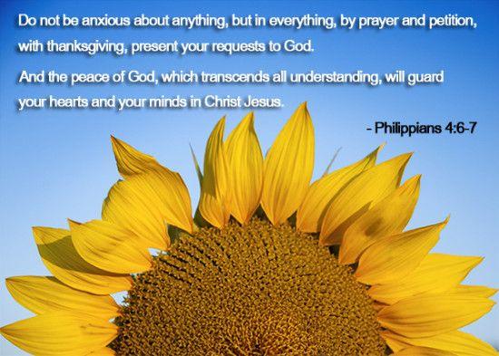 Message From God Her View From Home Sunflower Fields Sunflower Fields