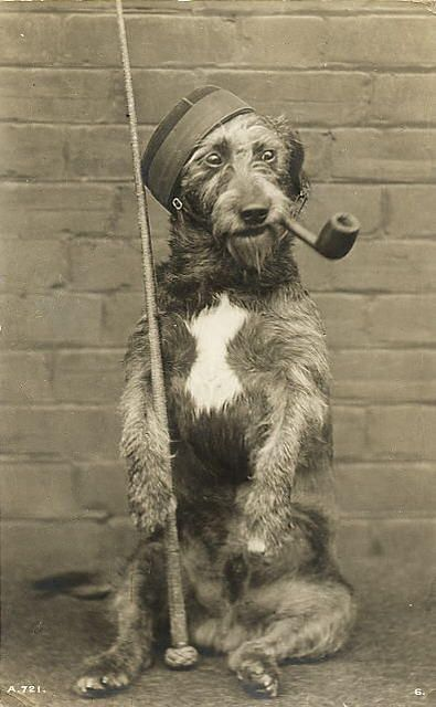 Dog Photography Pose Soo Funny Vintage Dog Dog Photography